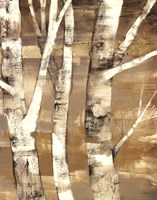 Wandering Through the Birches II Fine Art Print