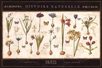 "Histoire Naturelle I by Pela - 36"" x 24"""
