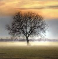 Misty Silhouette Fine Art Print