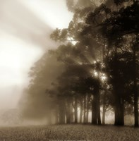 Misty Forest Fine Art Print