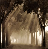 Misty Grove Fine Art Print