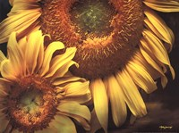 "16"" x 12"" Sunflower Pictures"