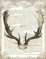 Regal Antlers on Newsprint II Fine Art Print