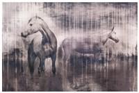 Grey Serenade Fine Art Print