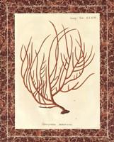 """Gorgonia Miniacea Marble by Wild Apple Portfolio - 16"""" x 20"""""""