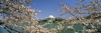Cherry blossom with memorial in the background, Jefferson Memorial, Tidal Basin, Washington DC, USA Fine Art Print