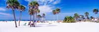 "Palm trees on the beach, Siesta Key, Gulf of Mexico, Florida, USA by Panoramic Images - 28"" x 9"""
