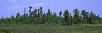 "Trees in a field, Suwannee Canal Recreation Area, Okefenokee National Wildlife Refug, Georgia, USA by Panoramic Images - 28"" x 9"" - $28.99"