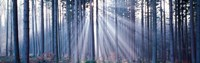 "Forest w/ sunrays Landsberg Vicinity Germany by Panoramic Images - 28"" x 9"""