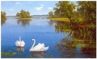 Swans on the Lake Fine Art Print