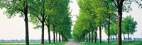 """Tree-lined road Noord Holland Edam vicinty Netherlands by Panoramic Images - 28"""" x 9"""""""