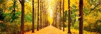Tree-lined Road Schwetzingen Germany