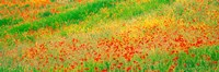 """Fields of flowers Andalusia Granada Vicinity Spain by Panoramic Images - 27"""" x 9"""""""