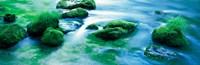 "Rocks with Moss, Oirase ravine Aomori Towadako-cho Japan by Panoramic Images - 28"" x 9"", FulcrumGallery.com brand"