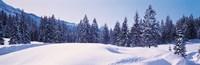 Snowy Field & Trees Oberjoch Germany