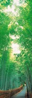 "Path Flanked by Green Trees, Sagano Kyoto Japan by Panoramic Images - 9"" x 27"""