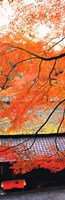 "Autumn Colors, Sagano Kyoto Japan by Panoramic Images - 9"" x 28"""