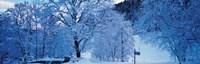 Snow Covered Trees Ramsau Germany