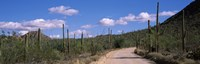 "Road passing through a landscape, Saguaro National Monument, Pima County, Tucson Mountains, Tucson, Arizona, USA by Panoramic Images - 28"" x 9"", FulcrumGallery.com brand"