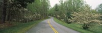 """Road passing through a landscape, Blue Ridge Parkway, Virginia, USA by Panoramic Images - 27"""" x 9"""""""
