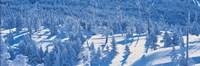 Snow Covered Trees Chino Nagano Japan