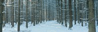 """Germany by Panoramic Images - 27"""" x 9"""", FulcrumGallery.com brand"""
