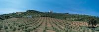 Olive Groves Evora Portugal