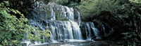 """Waterfall, South Island New Zealand by Panoramic Images - 27"""" x 9"""""""