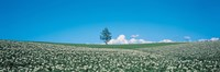 Potato field Biei-Cho Hokkaido Japan Fine Art Print