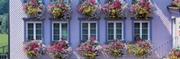 "Purple House with Flowers, Appenzell Switzerland by Panoramic Images - 27"" x 9"""