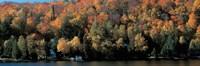 Autumn Trees Laurentide Quebec Canada