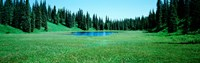 """Trees in a forest, Lakes, Alaska, USA by Panoramic Images - 28"""" x 9"""""""