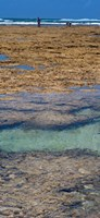 """Indian Ocean, Fringe Reef, Mombasa Marine National Park and Reserve, Kenya by Panoramic Images - 9"""" x 20"""""""