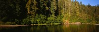 """Reflection of trees in a river, Smith River, Jedediah Smith Redwoods State Park, California, USA by Panoramic Images - 27"""" x 9"""""""