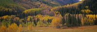 """Aspen trees in a field, Maroon Bells, Pitkin County, Gunnison County, Colorado, USA by Panoramic Images - 27"""" x 9"""""""