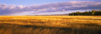 """Crop in a field, Last Dollar Road, Dallas Divide, Colorado, USA by Panoramic Images - 27"""" x 9"""""""