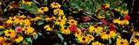 """Close-up of flowers growing in a field by Panoramic Images - 28"""" x 9"""""""