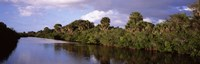 "Trees along a channel, Venice, Sarasota County, Florida by Panoramic Images - 28"" x 9"""