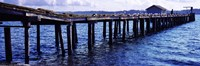 Seagulls on a pier, Whidbey Island, Island County, Washington State, USA Fine Art Print