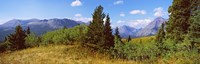 "Trees with mountains in the background, Looking Glass, US Glacier National Park, Montana, USA by Panoramic Images - 28"" x 9"""
