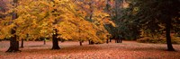 """Trees in a park, Chestnut Ridge County Park, Orchard Park, Erie County, New York State, USA by Panoramic Images - 28"""" x 9"""""""