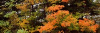"""Forest, Finger Lakes, New York State, USA by Panoramic Images - 27"""" x 9"""", FulcrumGallery.com brand"""