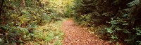 """Forest, Old Forge, Herkimer County, New York State, USA by Panoramic Images - 28"""" x 9"""", FulcrumGallery.com brand"""