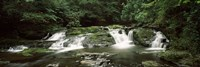 "Dingmans Creek flowing through a forest, Dingmans Falls Area, Delaware Water Gap National Recreation Area, Pennsylvania, USA by Panoramic Images - 27"" x 9"""