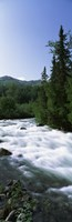 "River flowing through a forest, Little Susitna River, Hatcher Pass, Talkeetna Mountains, Alaska, USA by Panoramic Images - 9"" x 28"""