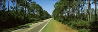 "Trees both sides of a road, Route 98, Apalachicola, Panhandle, Florida, USA by Panoramic Images - 27"" x 9"""