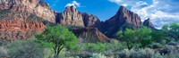 "Cottonwood trees and The Watchman, Zion National Park, Utah, USA by Panoramic Images - 28"" x 9"""