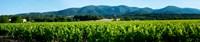 "Vineyards along D27, Vaugines, Vaucluse, Provence-Alpes-Cote d'Azur, France by Panoramic Images - 43"" x 9"""
