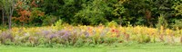 "Colorful meadow with wild flowers during autumn, Ontario, Canada by Panoramic Images - 31"" x 9"""
