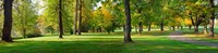 """Trees in autumn, Blue Lake Park, Portland, Multnomah County, Oregon, USA by Panoramic Images - 37"""" x 9"""""""